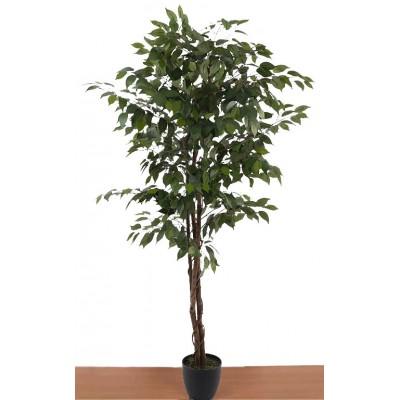 Διακοσμητικά Φυτά - Τεχνητό Φυτό Μπένζαμιν με Φυσικό κορμό. 180εκ. Φυτά Είδη Σπιτιού - saroglouhome.gr