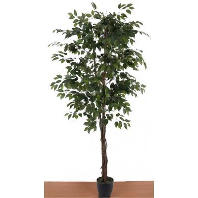 Διακοσμητικά Φυτά - Τεχνητό Φυτό Μπένζαμιν με Φυσικό κορμό. 210εκ. Φυτά Είδη Σπιτιού - saroglouhome.gr