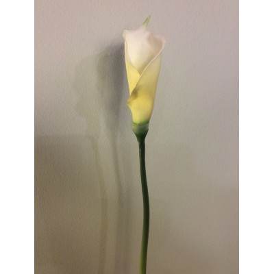 Cala Lily-Άσπρη