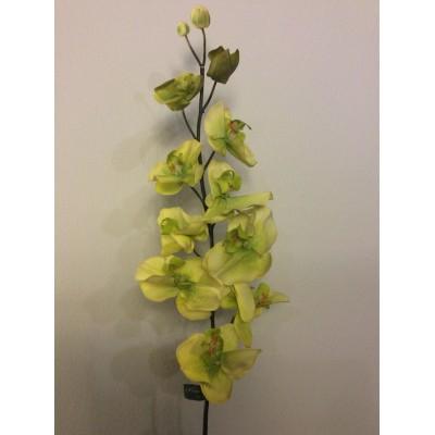 Orchidea-prasini