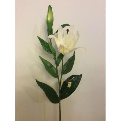 Lilioum-λευκό